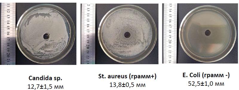 Исследование антимикробной и антигрибковой активности смеси фильтратов бактерий рода Bacillus sp.