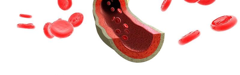 Самая известная роль витаминов К – участие в свертываемости крови